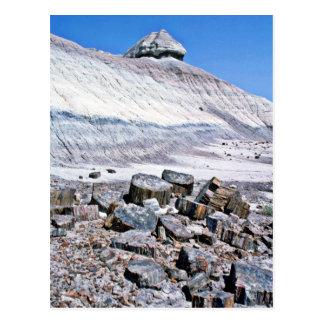 Cartão Postal Floresta Petrified - parque nacional do deserto