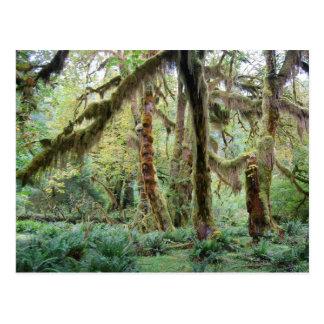 Cartão Postal Floresta tropical de Hoh