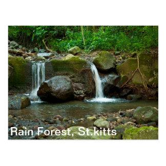 Cartão Postal Floresta tropical de St.kitts