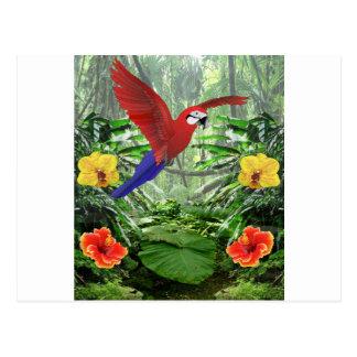 Cartão Postal Floresta tropical tropical