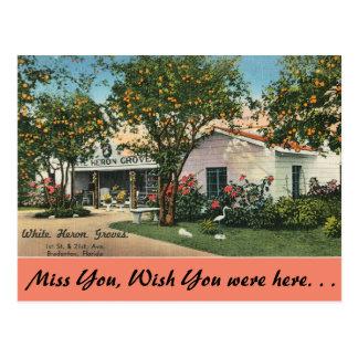 Cartão Postal Florida, Bradenton, bosques brancos da garça-real