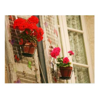 Cartão Postal flowerpots