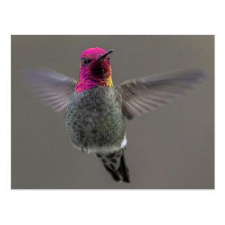 Cartão Postal Flying Hummingbird