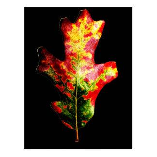 Cartão Postal Folha colorida do carvalho do outono