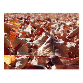 Cartão Postal Folha do outono na queda
