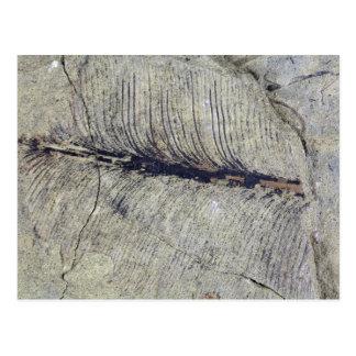 Cartão Postal Folha fóssil frágil da planta