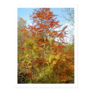 Cartão Postal Folhagem de outono