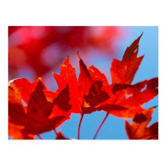 Cartão Postal Folhagem de outono de Oklahoma
