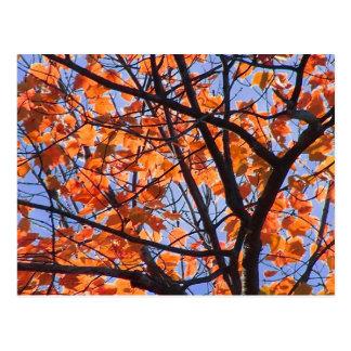Cartão Postal Folhagem de outono em NH 1
