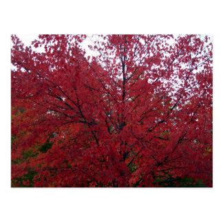 Cartão Postal Folhagem de outono em NH 2