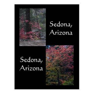 Cartão Postal Folhagem de outono na flor, arizona de Sedona