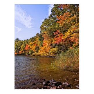 Cartão Postal Folhagem de outono na lagoa do ponto