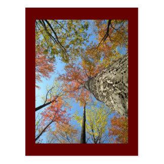 Cartão Postal Folhagem de outono que olha acima