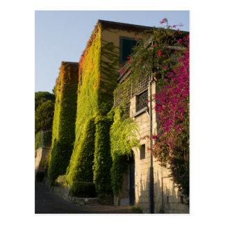 Cartão Postal Folhas coloridas em paredes da casa
