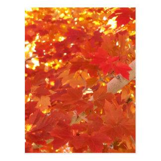 Cartão Postal Folhas de bordo brilhantes