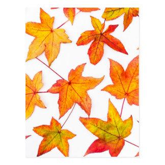 Cartão Postal Folhas de bordo em cores do outono
