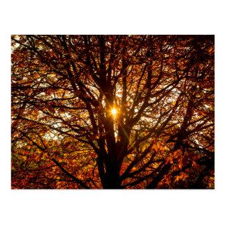 Cartão Postal Folhas de outono