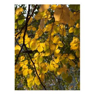 Cartão Postal Folhas de outono amarelas e verdes
