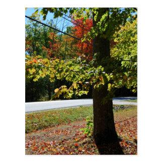 Cartão Postal Folhas de outono em Maine