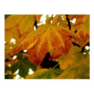 Cartão Postal Folhas de outono II