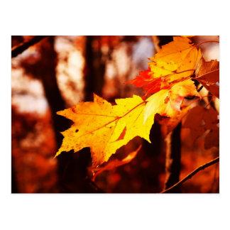 Cartão Postal Folhas de outono no Poconos