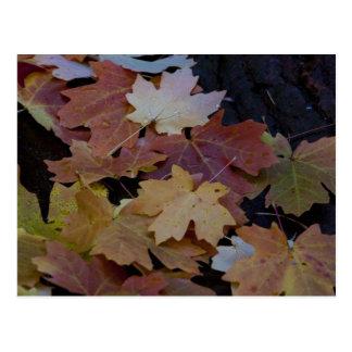 Cartão Postal Folhas de outono toda ao redor