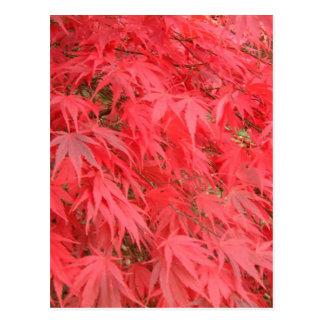 Cartão Postal Folhas do vermelho