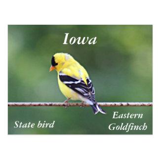 Cartão Postal Foto americana do goldfinch