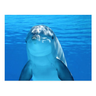 Cartão Postal Foto amigável do golfinho