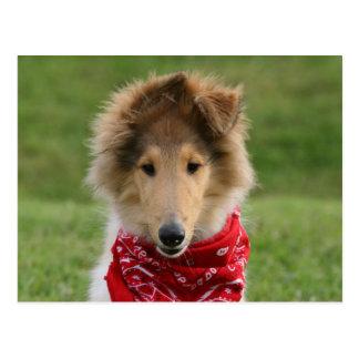 Cartão Postal Foto bonita bonito áspera do cão de filhote de