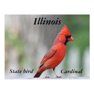 Cartão Postal Foto cardinal do norte
