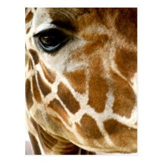 Cartão Postal Foto da natureza de animais selvagens do close up
