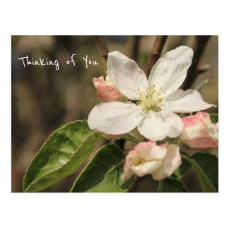 """Cartão Postal Foto das flores de Apple em Sun: """"Pensando de você"""