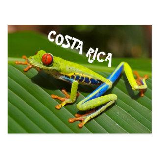 Cartão Postal Foto de Costa Rica do sapo de árvore eyed vermelho