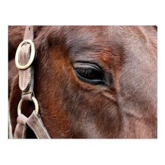 Cartão Postal Foto do cavalo