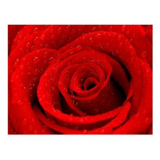 Cartão Postal Foto do fundo da rosa vermelha