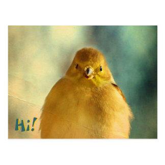 Cartão Postal Foto do Goldfinch
