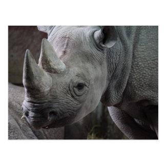 Cartão Postal Foto do rinoceronte preto