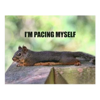 Cartão Postal Foto preguiçosa do esquilo