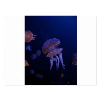 Cartão Postal Foto real tomada de medusas