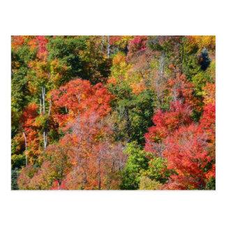 Cartão Postal Fotografia colorida da natureza do outono do