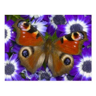 Cartão Postal Fotografia de Sammamish Washington da borboleta 10