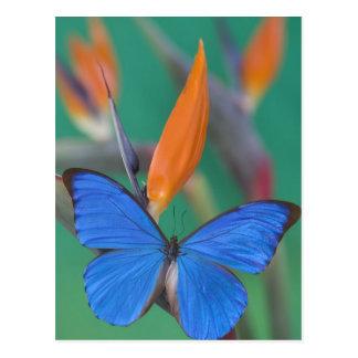 Cartão Postal Fotografia de Sammamish Washington da borboleta em