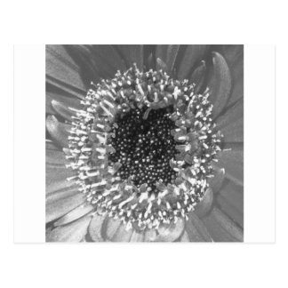 Cartão Postal Fotografia floral preto e branco