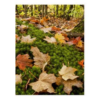 Cartão Postal Fotografia molhada do assoalho da floresta do