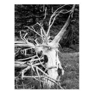 Cartão Postal Fotografia preto e branco da árvore inoperante