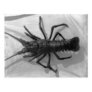 Cartão Postal Fotografia preto e branco da lagosta