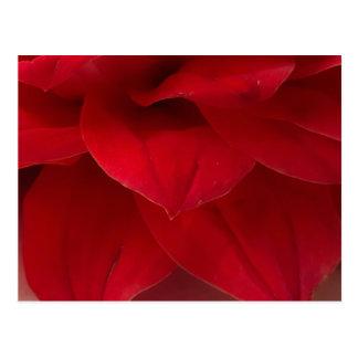Cartão Postal Fotografia vermelha das pétalas da dália