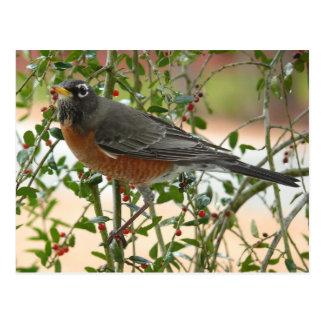 Cartão Postal Fotografias: pássaros -