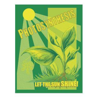 Cartão Postal Fotossíntese